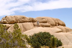 Joshua Tree National Park, 2009 - 076
