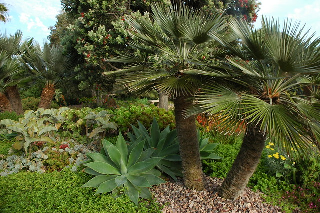 Water Retaining Plants : This lovely earth many kinds of trees fronds and