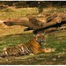 Miss Universe of Ranthambore! by Naseer Ommer