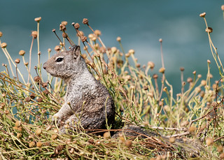 THE GROOVY SQUIRREL..-2.jpg