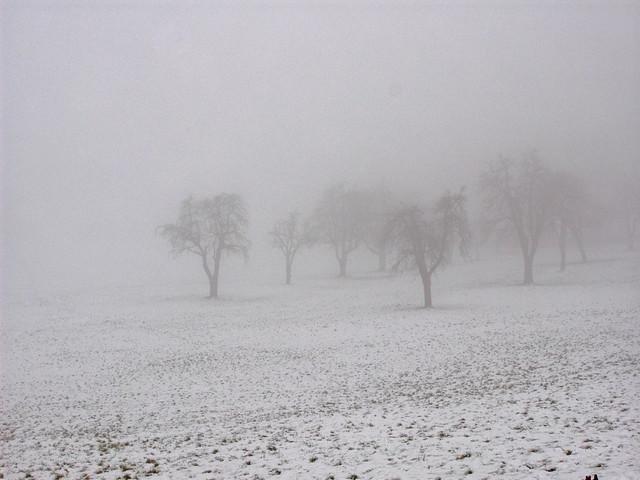 Niebla en el lago de la cabaña