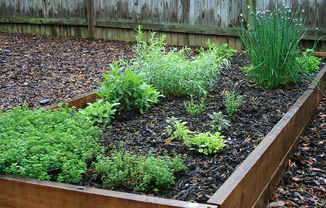 how to prepare an herb garden bed