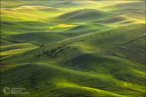 Green Palouse Hills