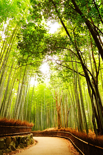 Bamboo forest 竹林の道_12