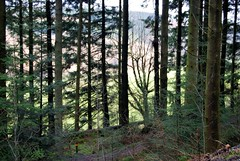 Grizedale Forest!
