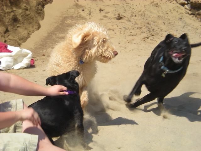 Image Result For Can Touching Dog