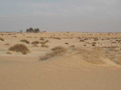Al-Jubail Desert