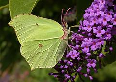Butterflies & Moths & Insects