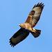SPÉIR - Stop Poisoning Eagles In Ireland