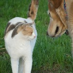 Interspecies Bonding:  Jordan bonds with Ruthie the Barn Cat