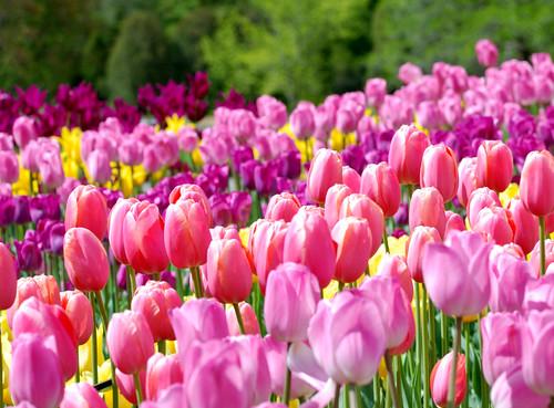 MN Landscape Arboretum_0012