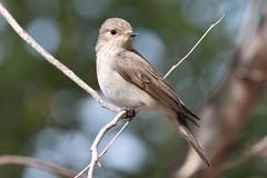 house finch(0.0), brambling(0.0), nightingale(1.0), animal(1.0), sparrow(1.0), ortolan bunting(1.0), branch(1.0), fauna(1.0), finch(1.0), emberizidae(1.0), beak(1.0), house sparrow(1.0), bird(1.0), wildlife(1.0),