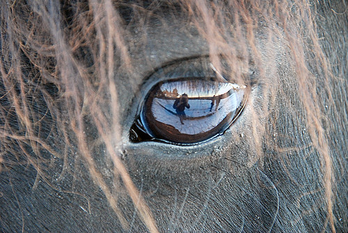 The man who photograph the horse's eye