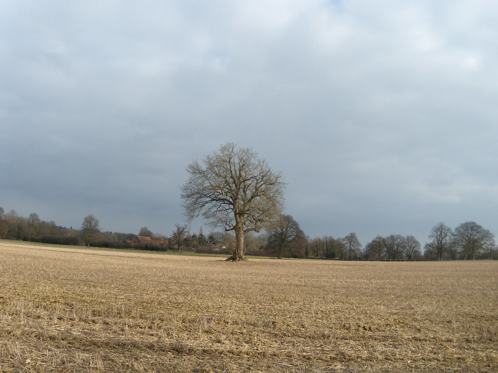 Lone tree Leigh to Sevenoaks