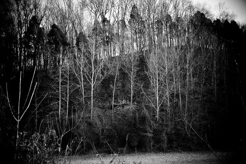 trees bw creek rocks tennesse horsecreek d700