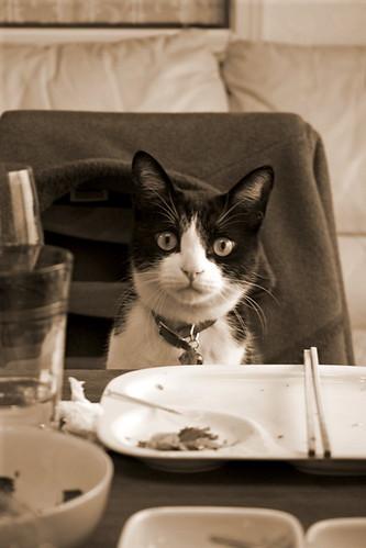 cat.108
