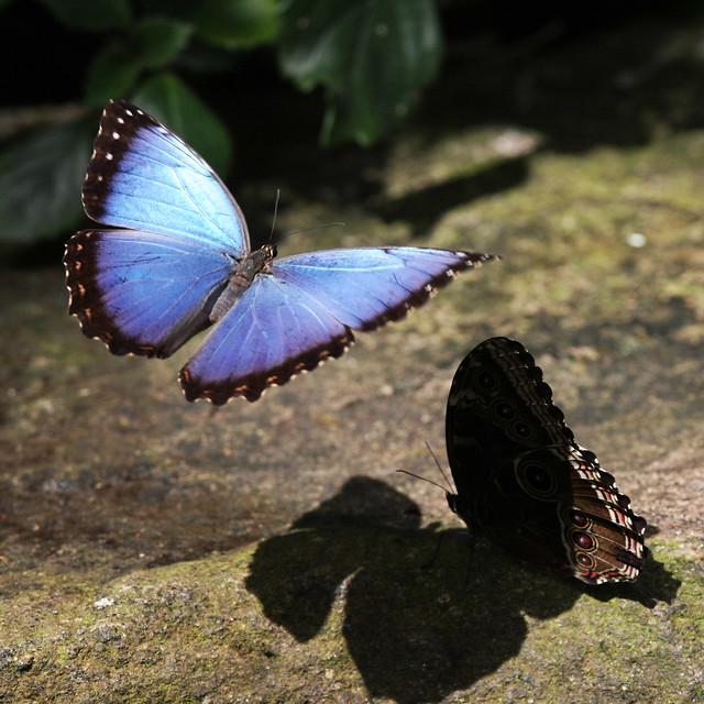 Z Gallerie Butterfly Butterflies II - a gal...