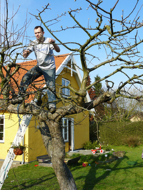 Pruning The Old Apple Tree Flickr Photo Sharing