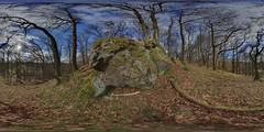Mugdock: Mugdock Woods 5 Milngavie Scotland Equirectangular
