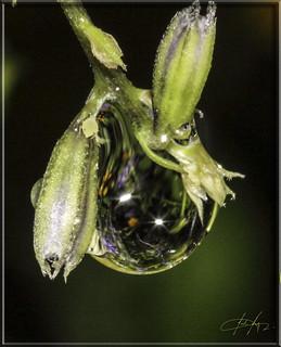 0342 Droplet