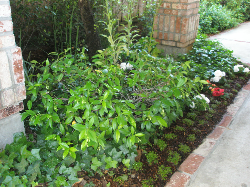 Shade landscaping ideas landscaping ideas shade for Low maintenance perennial bushes