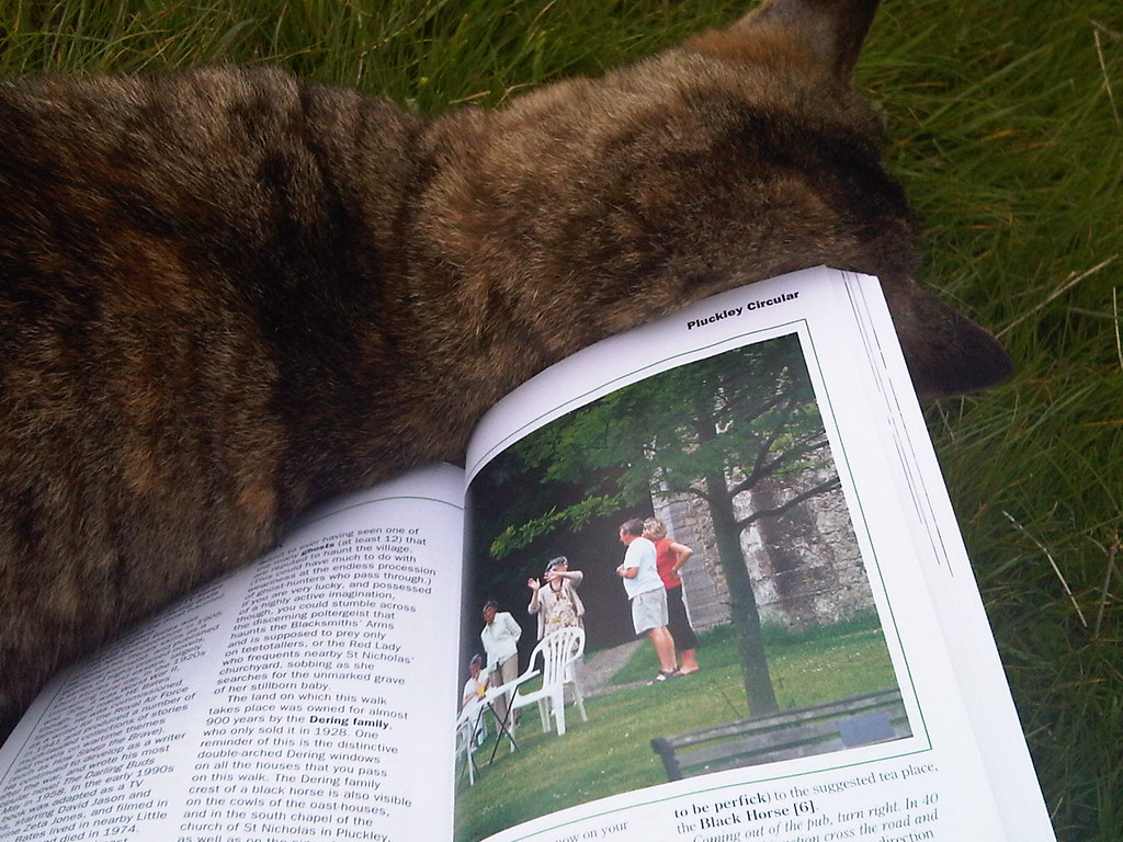 Friendliest cat in Kent