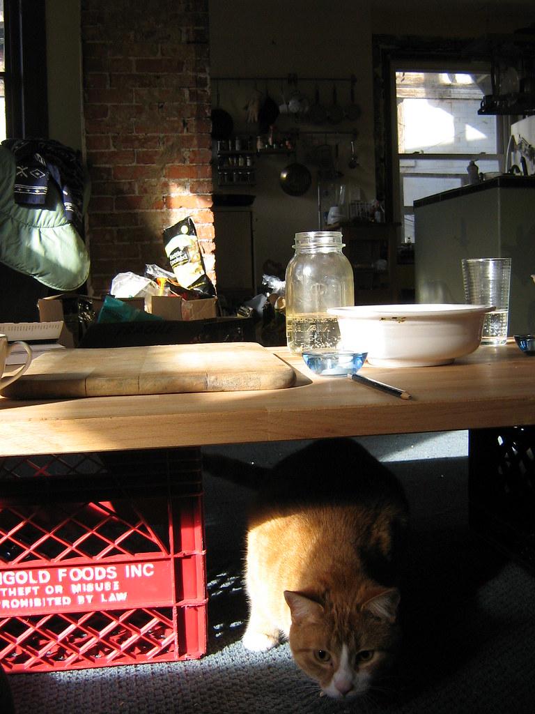Orange Kitty under coffee table