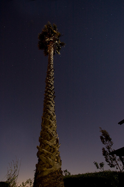palm tree, stars