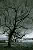 tree :: elbe