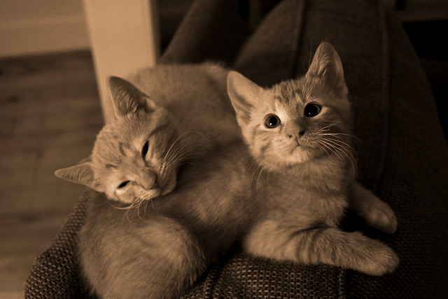 Free Kittens! from Flickr via Wylio