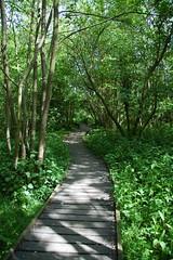 Moor Copse Nature Reserve