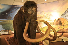 art, ancient history, elephant, elephants and mammoths, sculpture, mammoth,