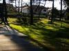 Shadows In The Green Garden
