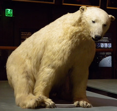 polar bear(0.0), animal(1.0), polar bear(1.0), mammal(1.0), fauna(1.0), bear(1.0),