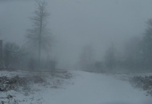 Knole Park - whiteout