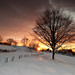 Winter Sunset by Wayne Young