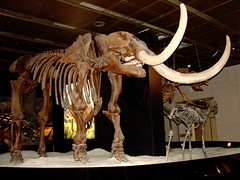 tourist attraction, art, elephants and mammoths, mammoth,
