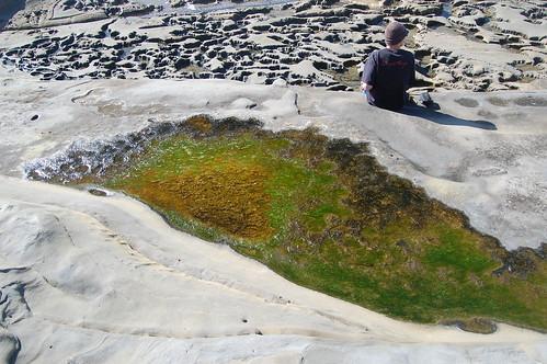 La Jolla -Tide Pools (22)