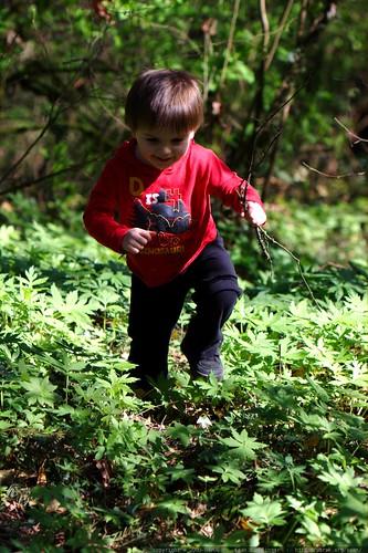 sequoia picking up sticks    MG 0228