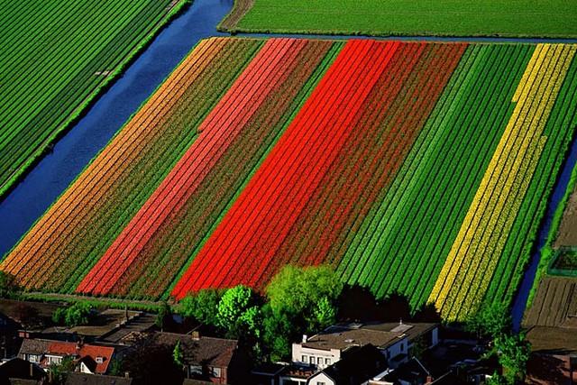 ▀ زهور التوليب Tulip Flowers صور ومعلومات ▀ 3597666126_7373038e74_z.jpg?zz=1