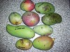 Mangifera - Photo (c) Eric Bronson, some rights reserved (CC BY)