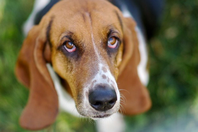 Droopy eyes | Flickr - Photo Sharing!