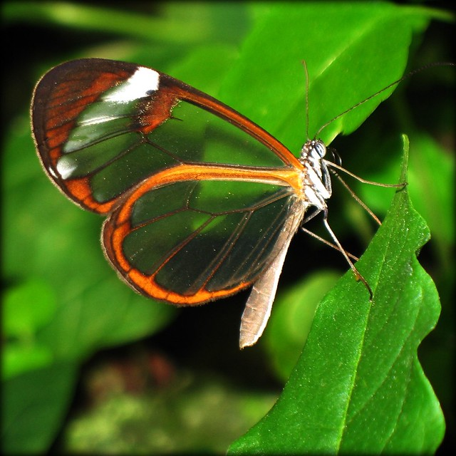 Look straight through the Wings of the Butterfly