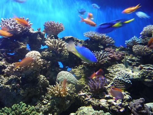Birch Aquarium 2.14.09