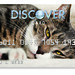 Cat Design Credit Card: Quinn