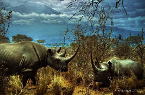 black history museum photoshop photography high searchthebest dynamic national rhino kris range hdr rhinoceros kkg photomatix kros kriskros 5xp flickrsbest kkgallery