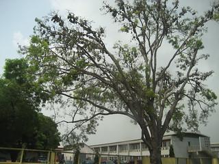 bats treetop