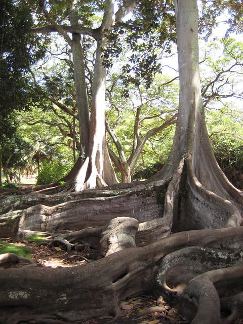 National tropical botanical garden kauai explore - National tropical botanical garden ...