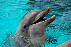 sea(0.0), spinner dolphin(0.0), animal(1.0), marine mammal(1.0), common bottlenose dolphin(1.0), marine biology(1.0), fauna(1.0), dolphin(1.0), rough-toothed dolphin(1.0), tucuxi(1.0),