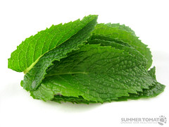 vegetable(0.0), flower(0.0), plant(0.0), produce(0.0), food(0.0), perilla(0.0), annual plant(1.0), leaf(1.0), lemon balm(1.0), herb(1.0),